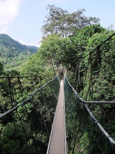 Canopy Walkway in the Taman Negara National Park.