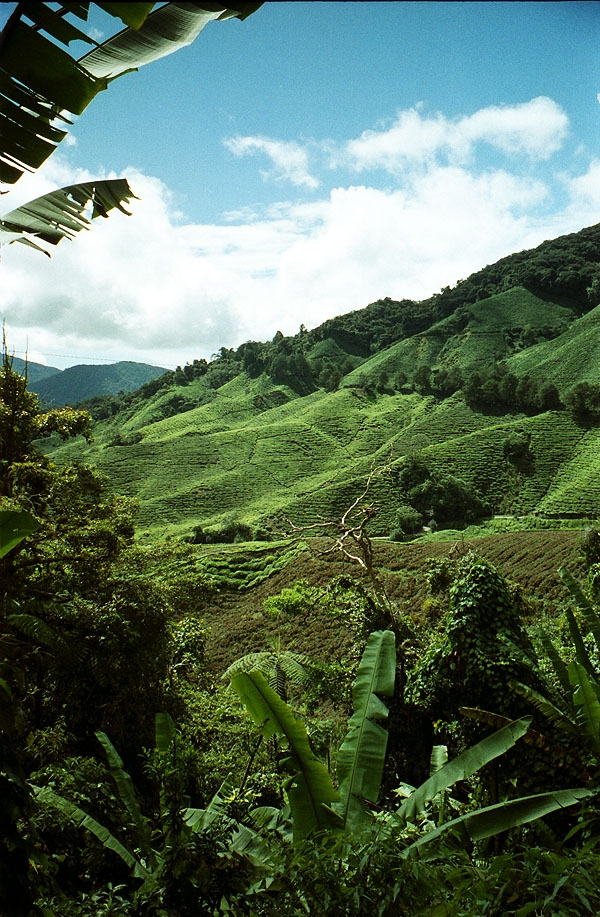 Malaysia's hill country: The Cameron Highlands
